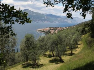 Olivenanbau Torri del Benaco Gardasee