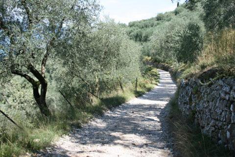 Permalink to: Die Antiken Orsteile von Torri del Benaco